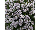 Пряные травы (27)
